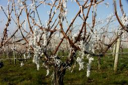 Automne-hiver : Arrachage de la vigne